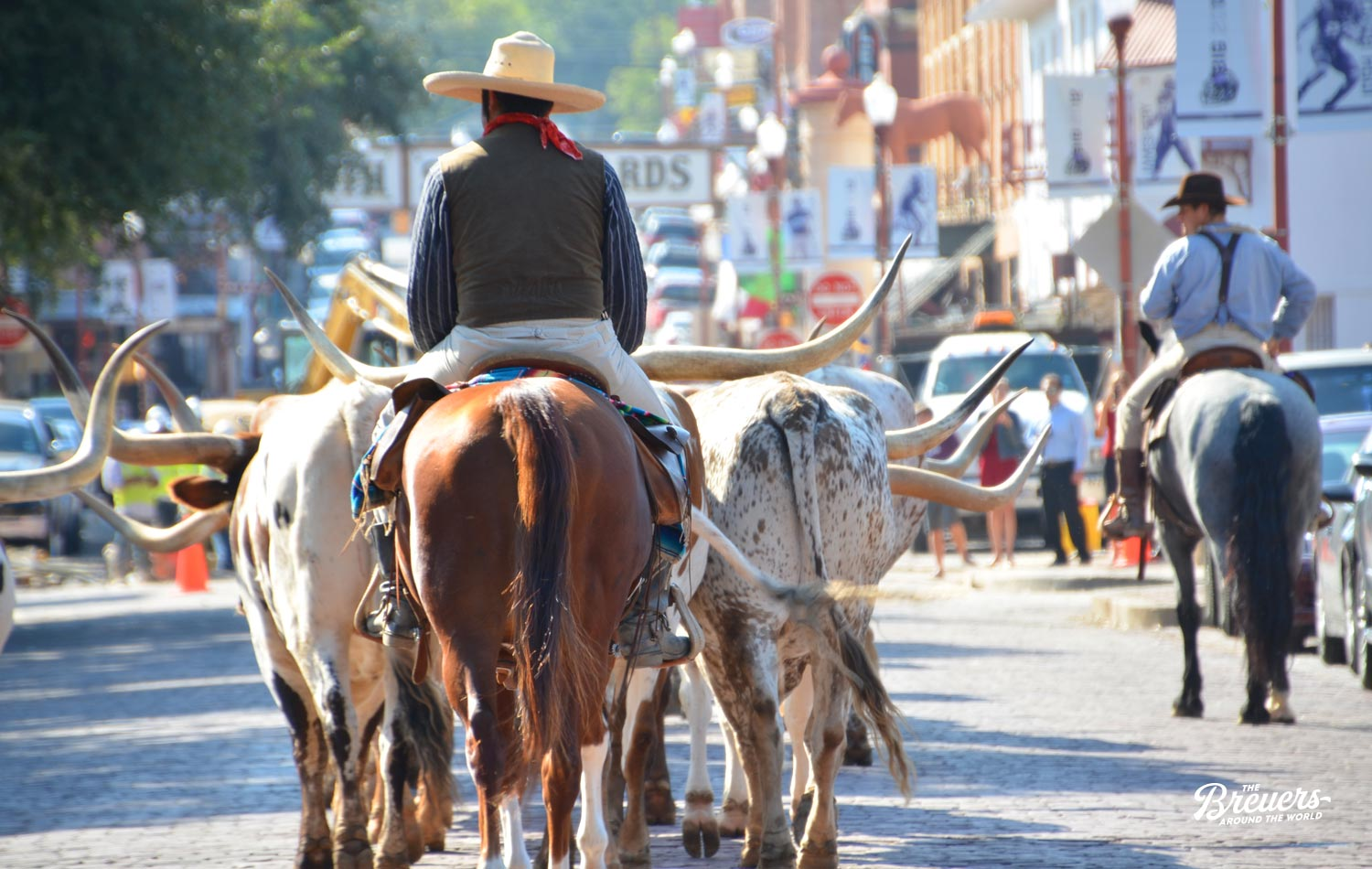Cattle Drive in Fort Worth Texas